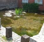 Natural Spring, Havant